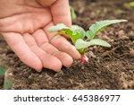gardener' s hand waiting when... | Shutterstock . vector #645386977