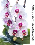home orchid | Shutterstock . vector #645477007