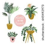 Potted  House Plants Isolated...