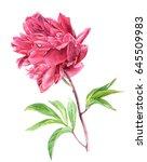 hand drawn watercolor pink... | Shutterstock . vector #645509983