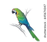 green macaw parrot ara...   Shutterstock .eps vector #645674347