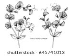 sweet peas flowers drawing and... | Shutterstock .eps vector #645741013