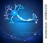 nerve cell anatomy detailed... | Shutterstock .eps vector #645801253