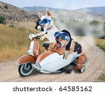 Two Chihuahuas In A Scooter