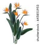 strelitzia reginae tropical... | Shutterstock .eps vector #645851953