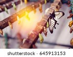 large tropical butterfly hatch... | Shutterstock . vector #645913153