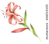 image tiger lily flowers. hand... | Shutterstock . vector #646014103