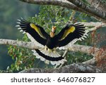 Great Hornbill  Great Indian...