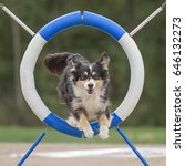Small photo of Australian shepherd jumps through agility ring in agility dog competition