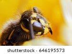 Wasp On Dandelion. Super Macro...