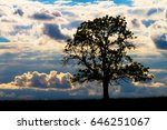 single tree at sunset with a... | Shutterstock . vector #646251067