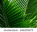 green palm leaf | Shutterstock . vector #646335673