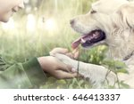 dog's paw and boy's hand... | Shutterstock . vector #646413337