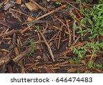 the green climbing plant... | Shutterstock . vector #646474483