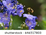 Bumblebee Hovering Near Flower