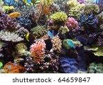 aquarium corals reef | Shutterstock . vector #64659847