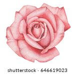 hand painted watercolor rose ... | Shutterstock . vector #646619023