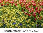 Red White Tulips Yellow...