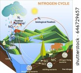 Scheme Of The Nitrogen Cycle ...