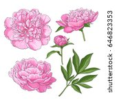 set of peony flowers  bud ... | Shutterstock .eps vector #646823353