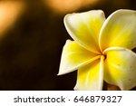 plumeria in garden | Shutterstock . vector #646879327