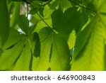 natural abstract background... | Shutterstock . vector #646900843