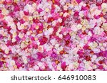 Stock photo beautiful flowers as background 646910083