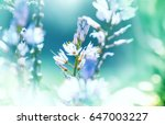 Stock photo amazing colorful flower 647003227