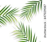palm leaves. palm leaves on... | Shutterstock .eps vector #647029087