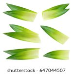 pineapple leaves isolated on... | Shutterstock . vector #647044507