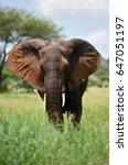 elephants   serengeti natural... | Shutterstock . vector #647051197
