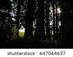 forest  backlight | Shutterstock . vector #647064637