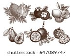 vector collection of hand drawn ... | Shutterstock .eps vector #647089747