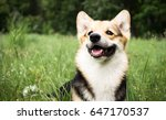 happy and active purebred welsh ... | Shutterstock . vector #647170537