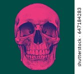 hand drawn realistic pink skull ...   Shutterstock .eps vector #647184283
