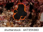 juvenile batfish with orange... | Shutterstock . vector #647354383