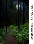 pathway in forest at nighttime... | Shutterstock . vector #647379433