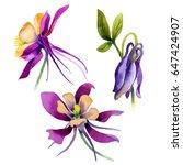 wildflower orchid flower in a... | Shutterstock . vector #647424907