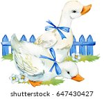 cute duck. domestic farm bird... | Shutterstock . vector #647430427