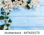 white bougainvillea flowers | Shutterstock . vector #647633173