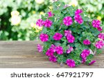 Pink Flowering Petunia In Pot...