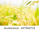 Small photo of save grains, save green