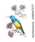 watercolor drawn hummingbird on ... | Shutterstock . vector #648047377