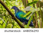 Jungle Bird With Purple  Blue ...