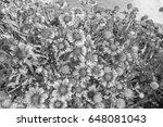 chrysanthemum in the park style ...   Shutterstock . vector #648081043