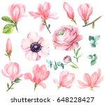 eucalyptus  magnolia  anemone ... | Shutterstock . vector #648228427