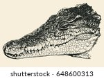 head of a crocodile. hand drawn ... | Shutterstock .eps vector #648600313
