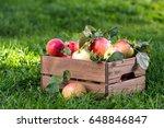 freshly pickled ripe organic... | Shutterstock . vector #648846847