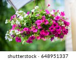 Hanging Flowers Pot Containing...