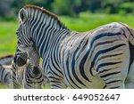 Namibia Etosha National Park...
